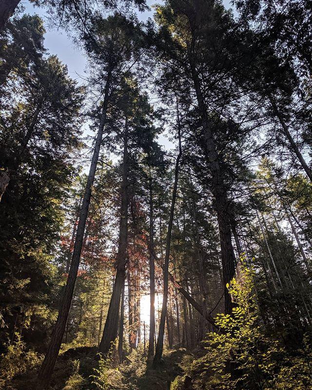 Sunrise ☀️🌲 . . . #explorebc #nature #getoutside #healing #britishcolumbia #explore #adventure #canada #sunshinecoast #getoutside #pnw #pnwonderland #forest