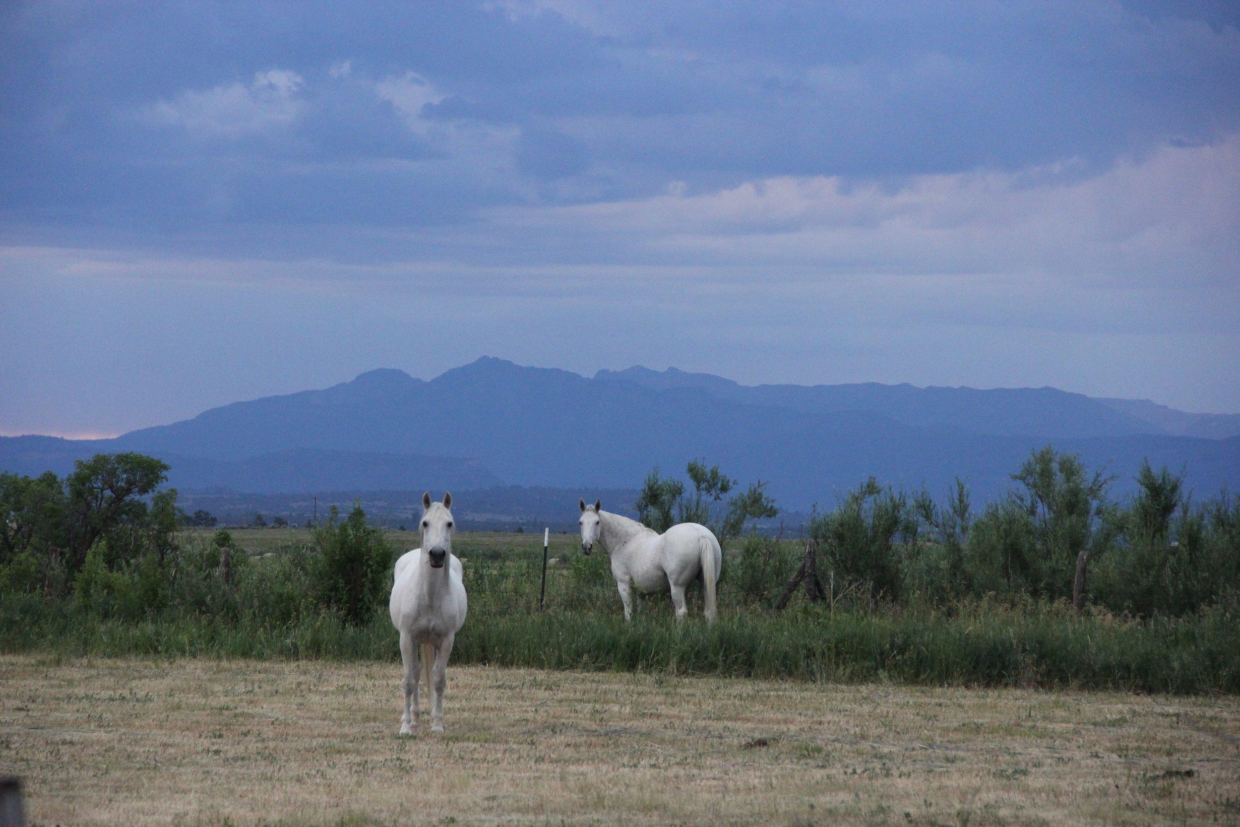 Local horses in Tierra Amarilla, NM