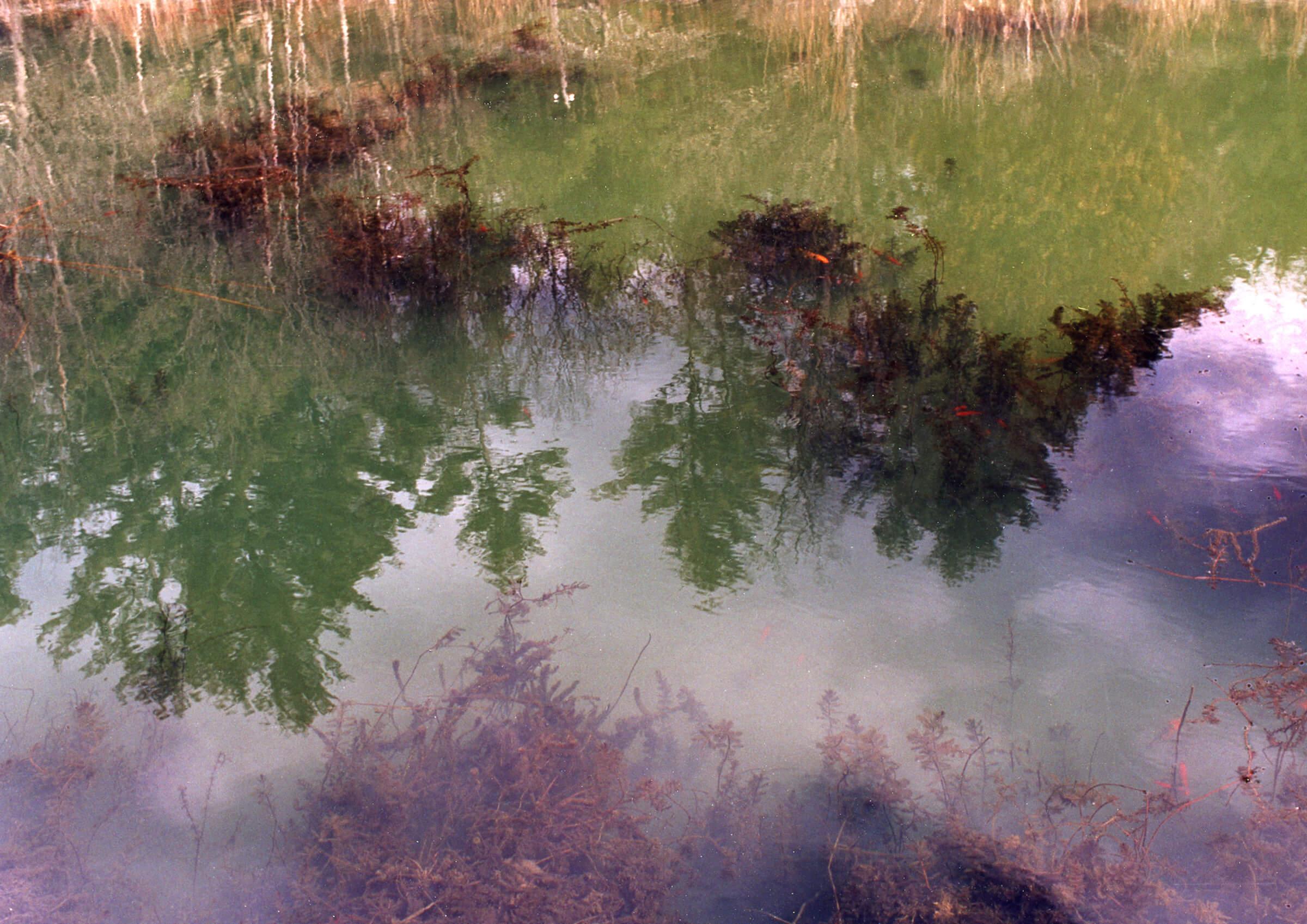 Fish pond-2.jpeg