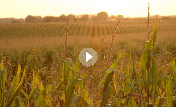 Harvesting the unharvested to feed millions>> -