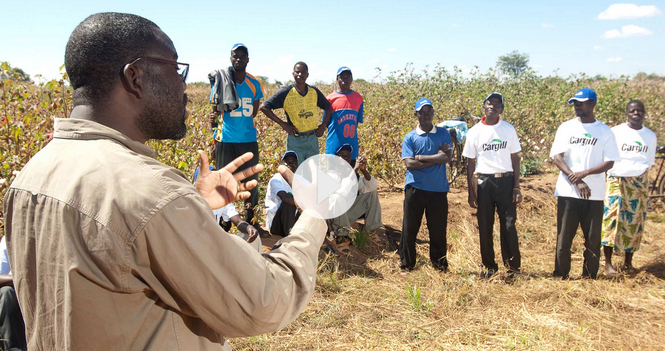 Cultivating farm skills & community in Zambia>> -