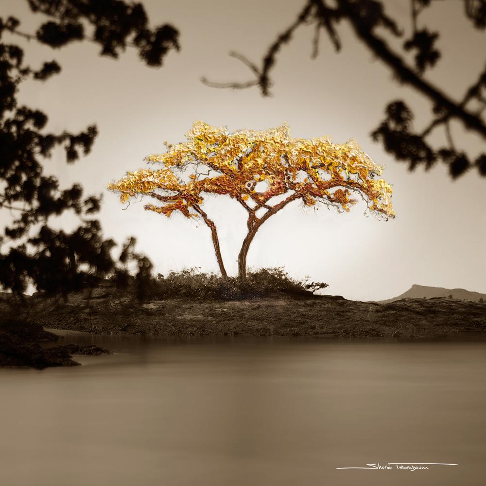 Galiano Tree Painted