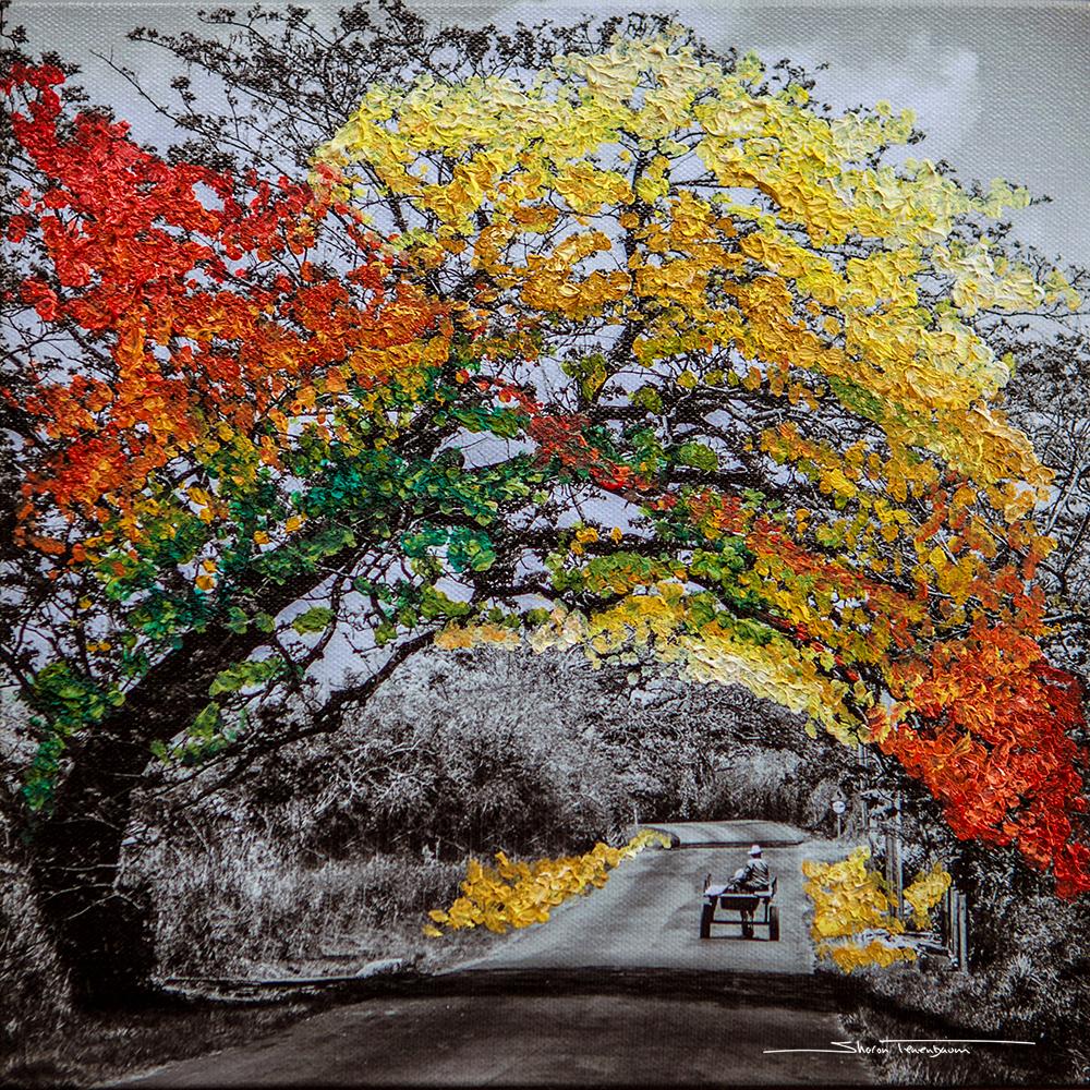 Cuban Tree Painted