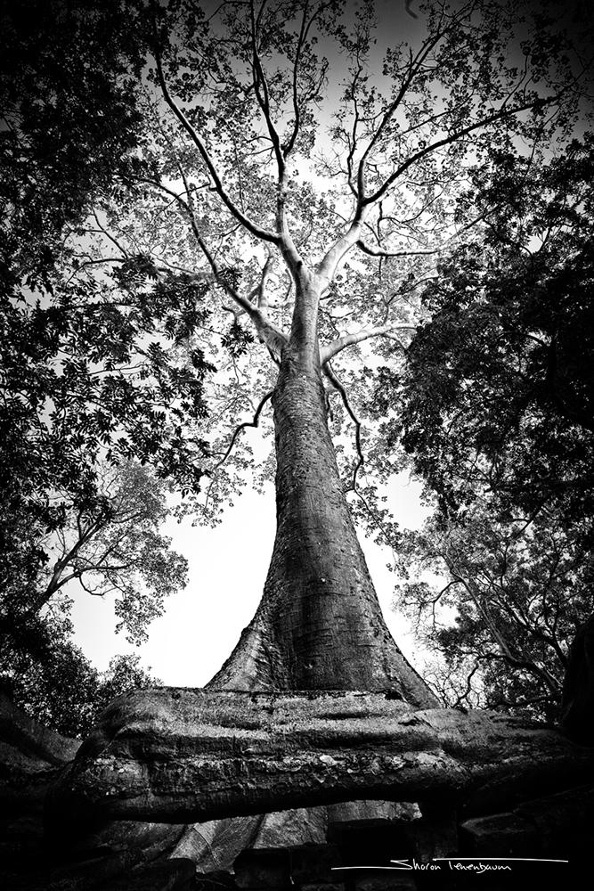 Cobra Tree Original Black and White Photograph