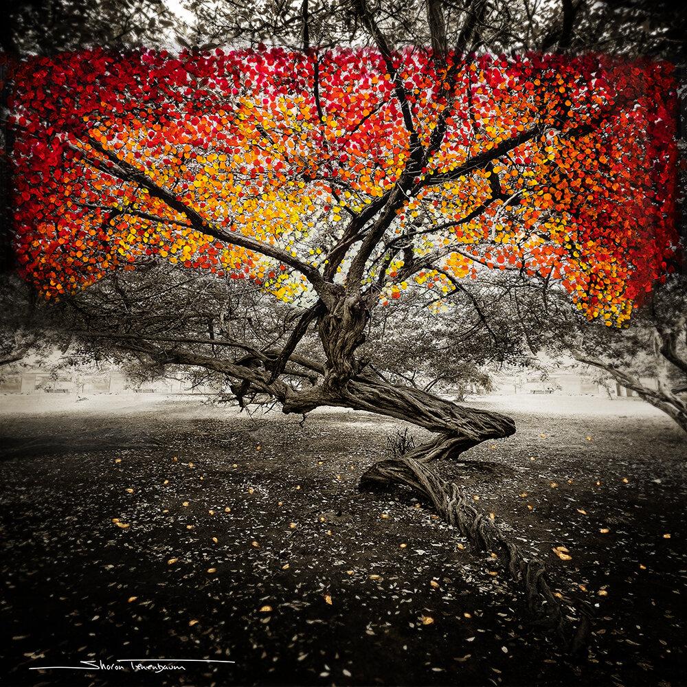 Cartagena Tree - Painted as Autumn