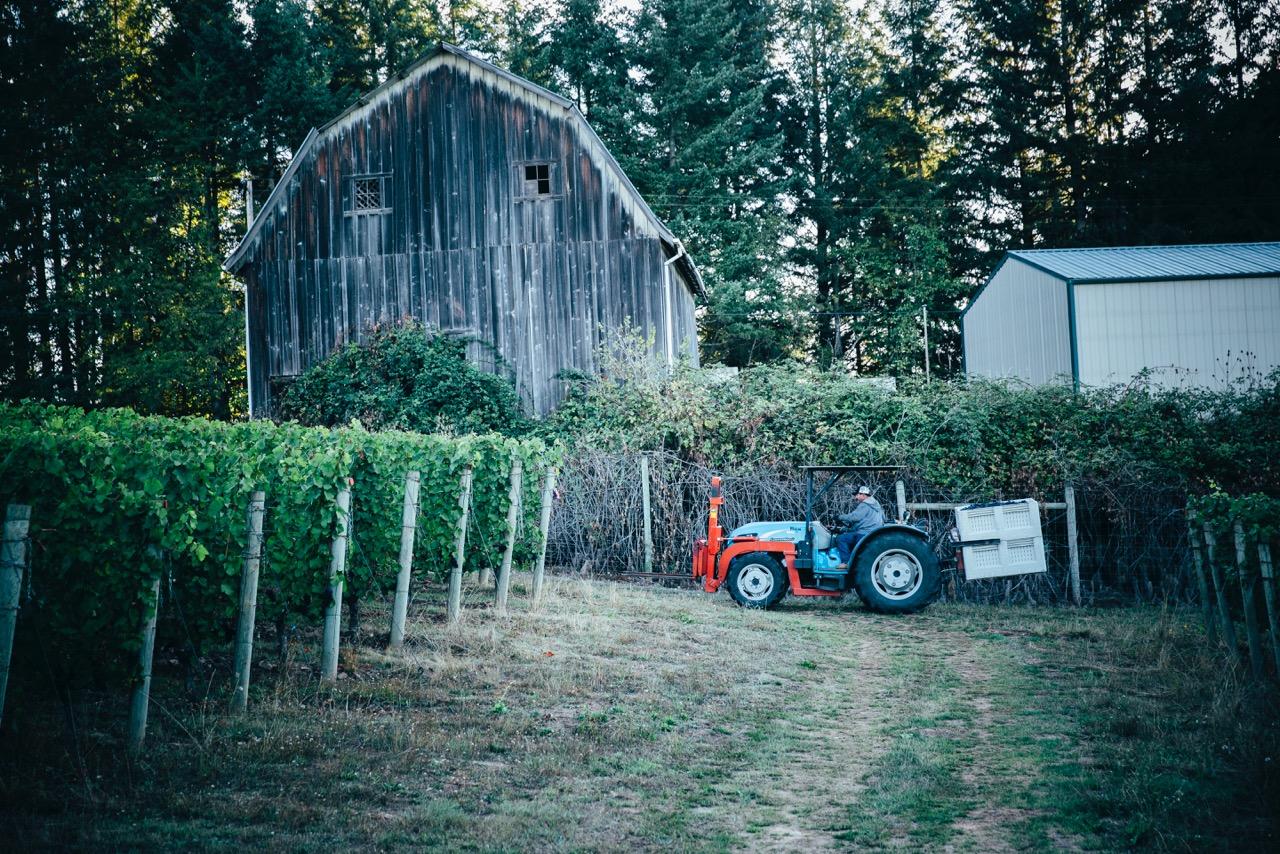 Tractor in Vineyard for Adelsheim Harvest