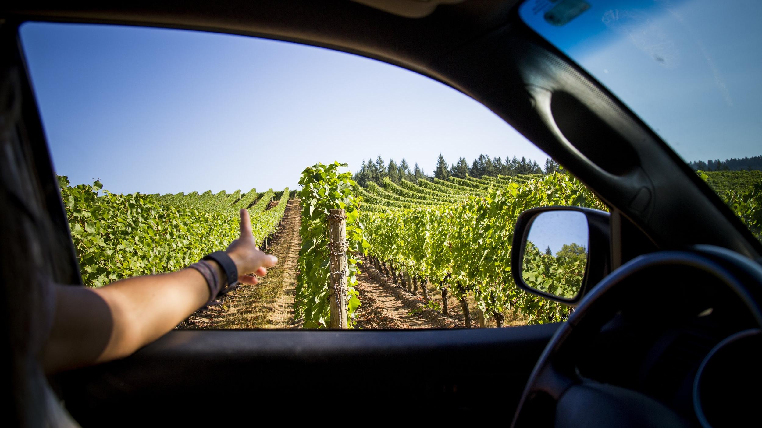Arm Pointing at Vines Driving Through Adelsheim Vineyard