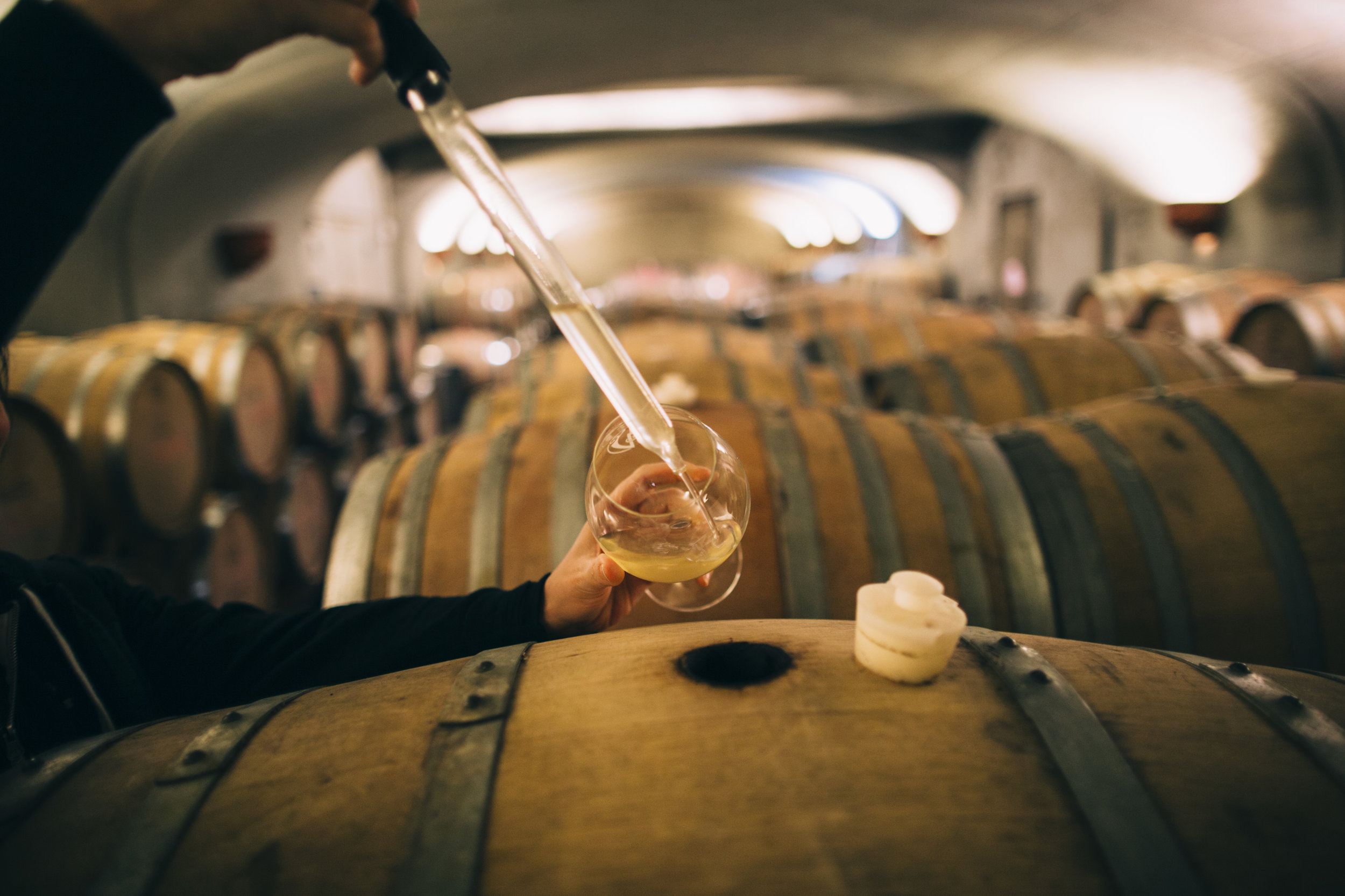 Winemaking and Testing from Wine Barrels at Adelsheim