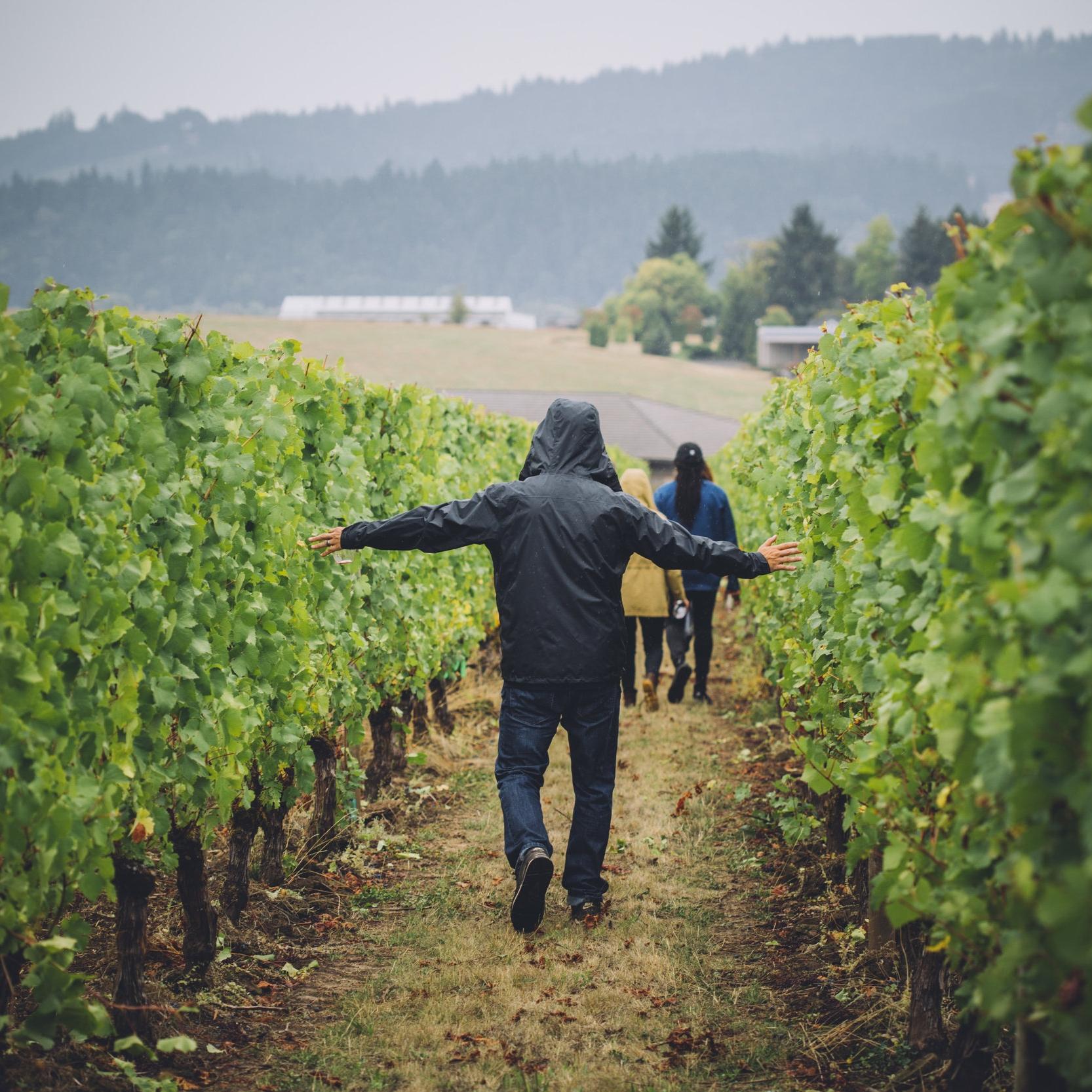 Vineyard Trek, guided treks through the Calkins Lane Vineyard