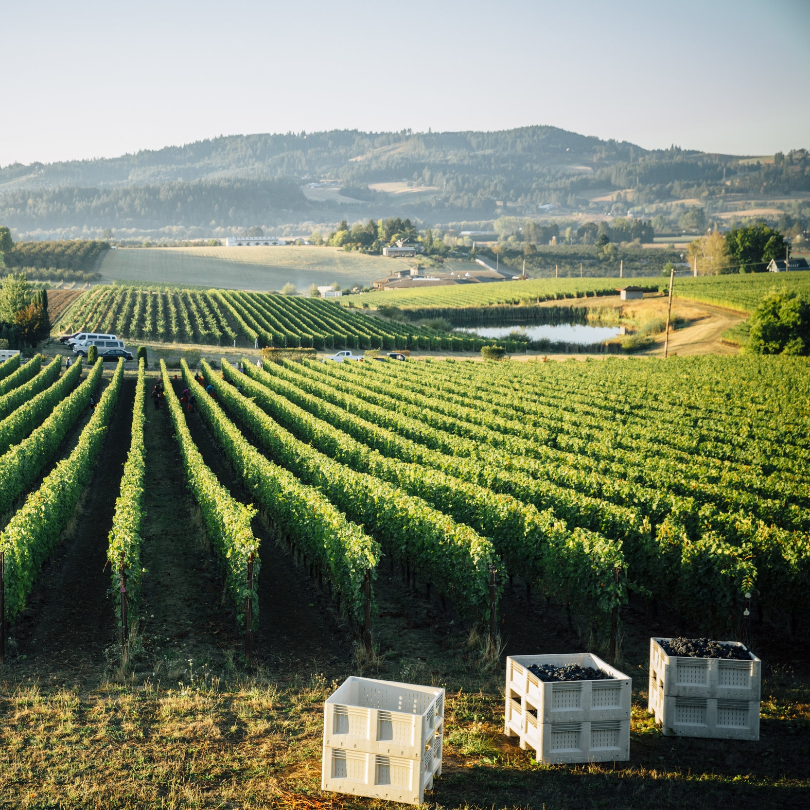 Wine Event - Sub-AVAs and Single Vineyards
