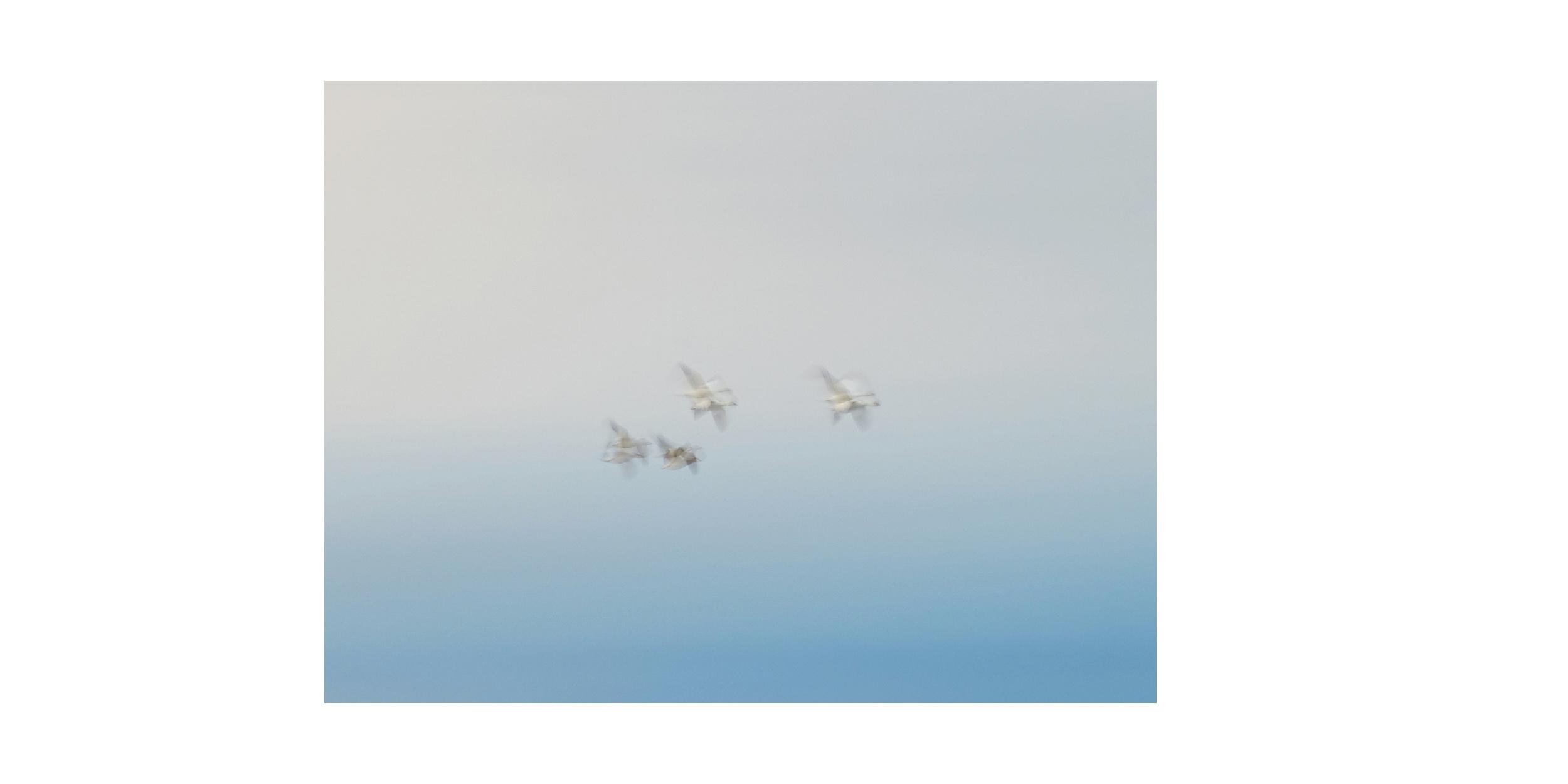 ArcticFront-13.jpg