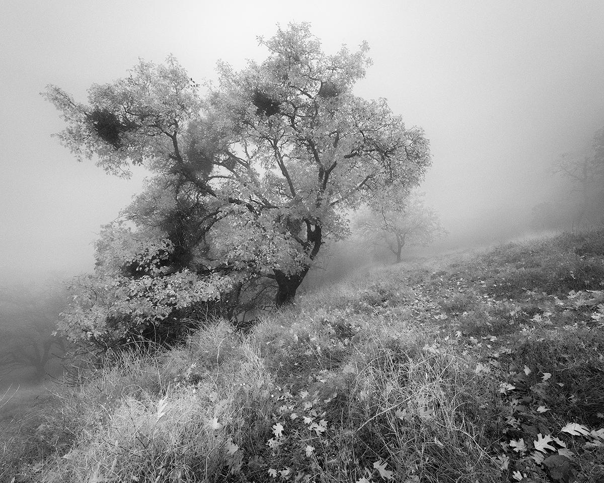 Pine Ridge 1.jpg