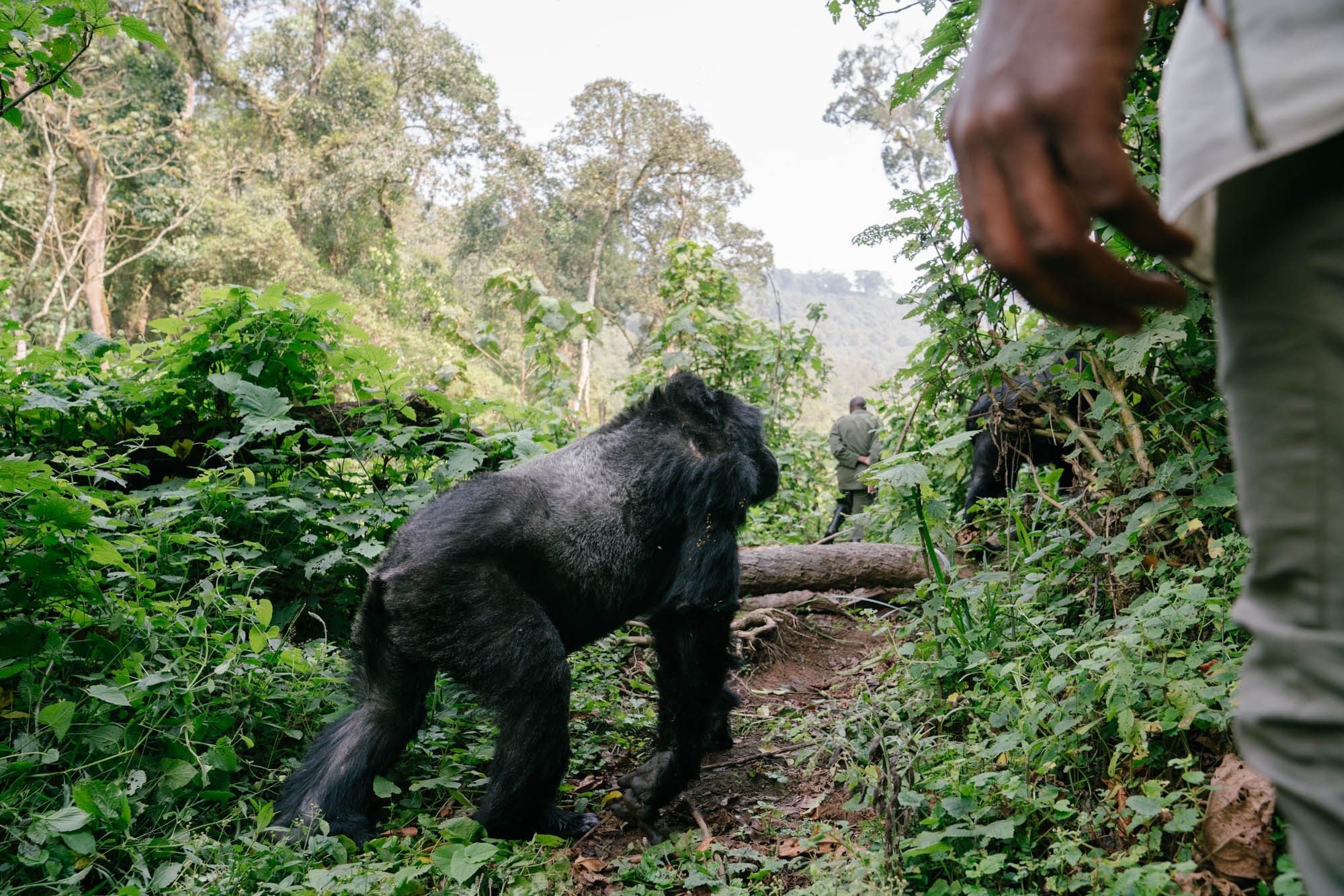 CHS0030_SapphireSeven_Gorilla Tracking_-45.jpg