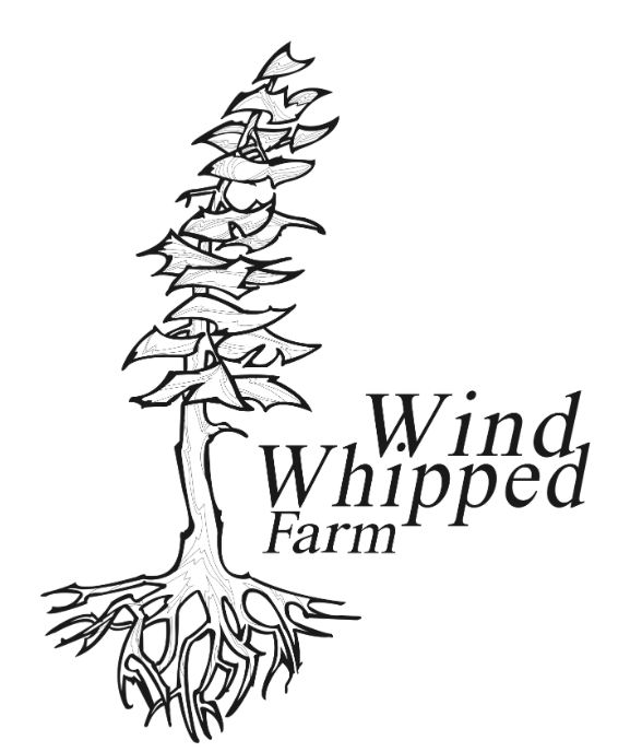 Wind Whipped Farm will be donating fresh produce for our Sunday lunch!  Alex Fletcher and Virginie Lavallée-Picard coordinate The Local Food Box Program and operate Wind Whipped Farm.  Wind Whipped Farm is a market garden and orchard in Metchosin.We started in 2008 and sold in 2009 at our road stand, through a local box program and, by bicycle, at the Metchosin Farmers' market.