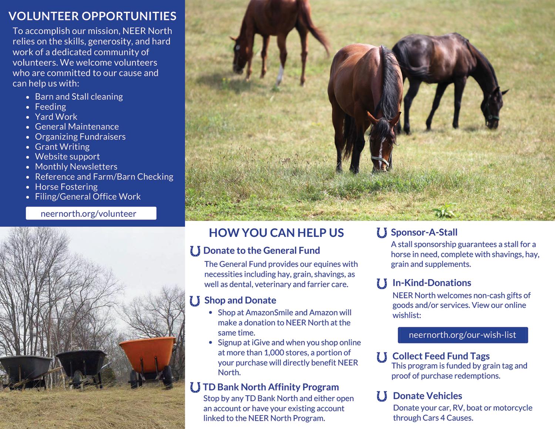 Non Profit Equine Rescue Brochure - Back