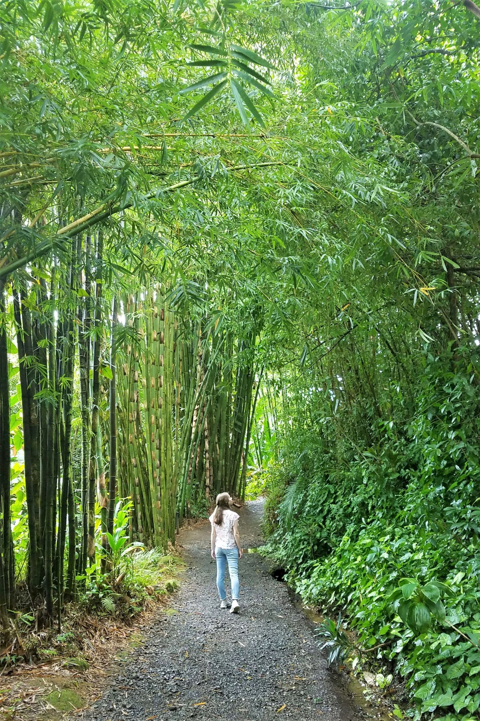 This bamboo forest is one of the most popular Road to Hana stops located in Maui's Garden of Eden.