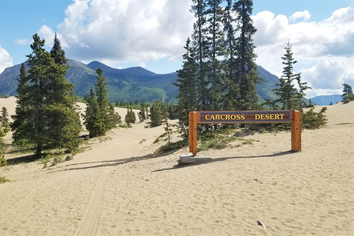 A wooden sign that says Carcross Desert places in the middle of sand and surrounded by green trees.
