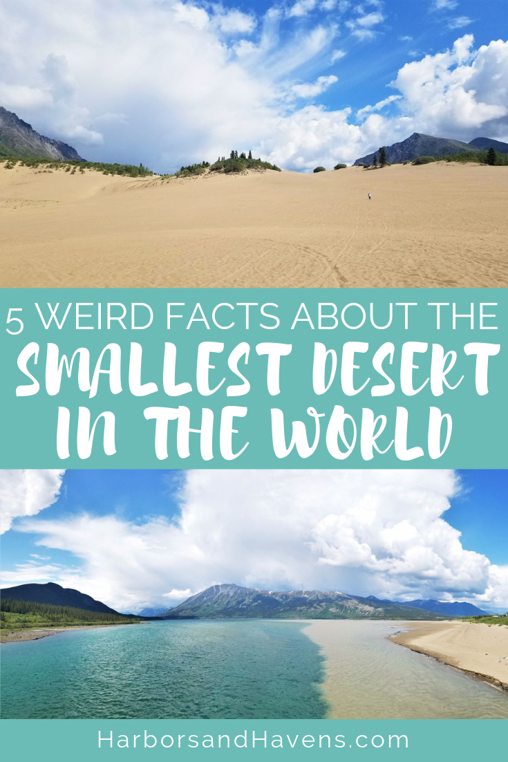 This desert oasis is tucked away in the Yukon territory of Canada. Find out everything you need to know about visiting the Carcross Desert. Carcross Yukon | Carcross Canada | desert travel | Canada sightseeing | Canada travel destinations