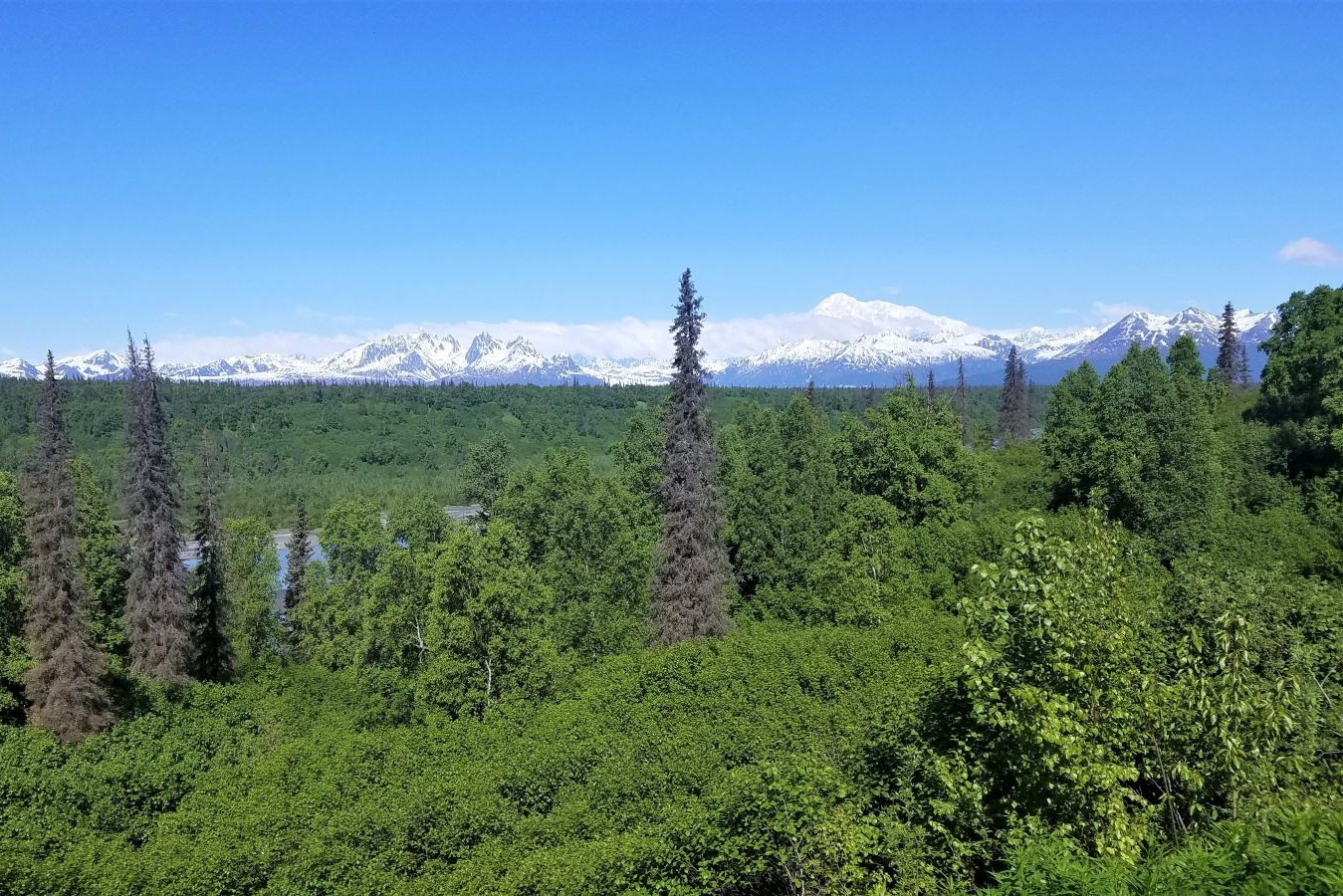 An Alaska itinerary for 10 days should include a trip to see Denali, the snow-capped peak in the center of this mountain range with forests of green in front.