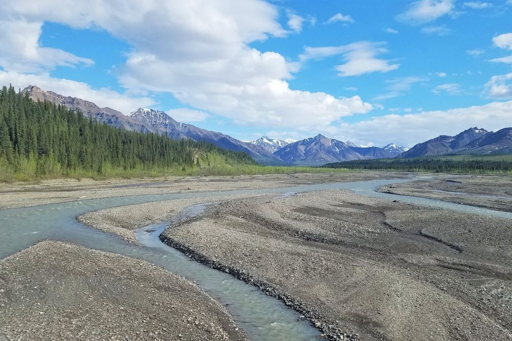 Visiting Denali National Park you might see this river flowing low and surrounded by tall green trees and several mountain peaks.