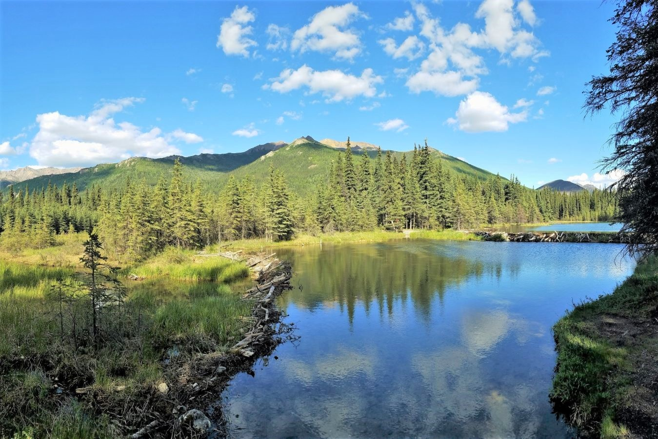 One of the best things to do in Denali is the Horseshoe Lake Trail, pictured with pine trees and clouds reflecting on the surface.