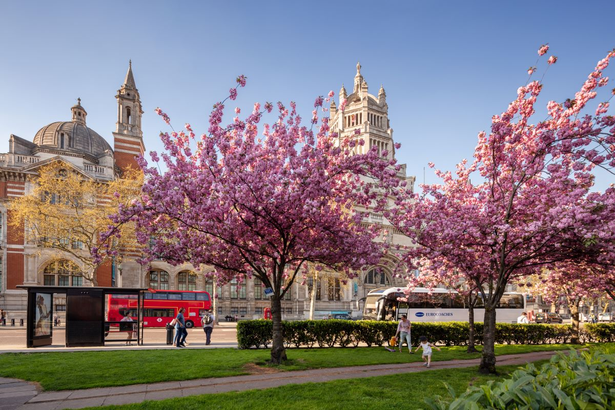 Old museum buildings with buses in front and two flowering purple trees in the forefront. What to do in London for 4 days should include some of the city's many incredible buildings.