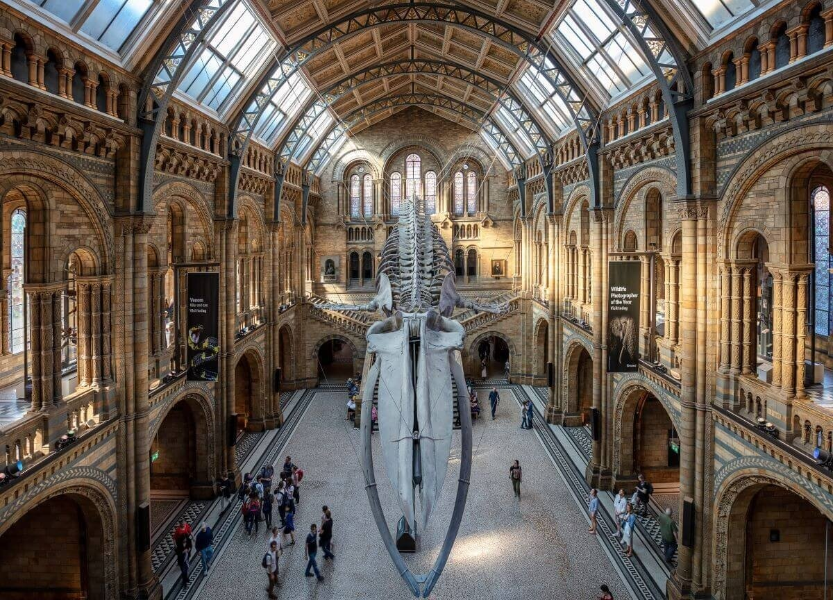 A huge dinosaur skeleton hangs in the middle of a stone corridor filled with people in the Natural History Museum, one of the best activities in London.