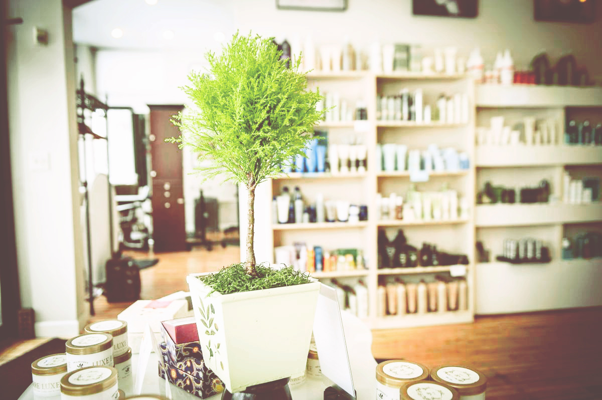 Salon La Terre reception area with products and green tree