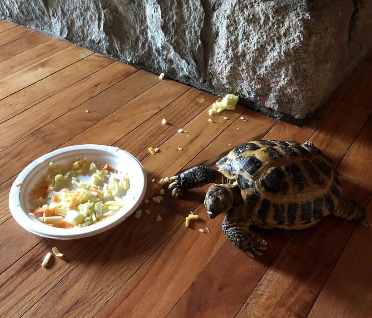 Charlotte, Souza's pet tortoise ( Image )
