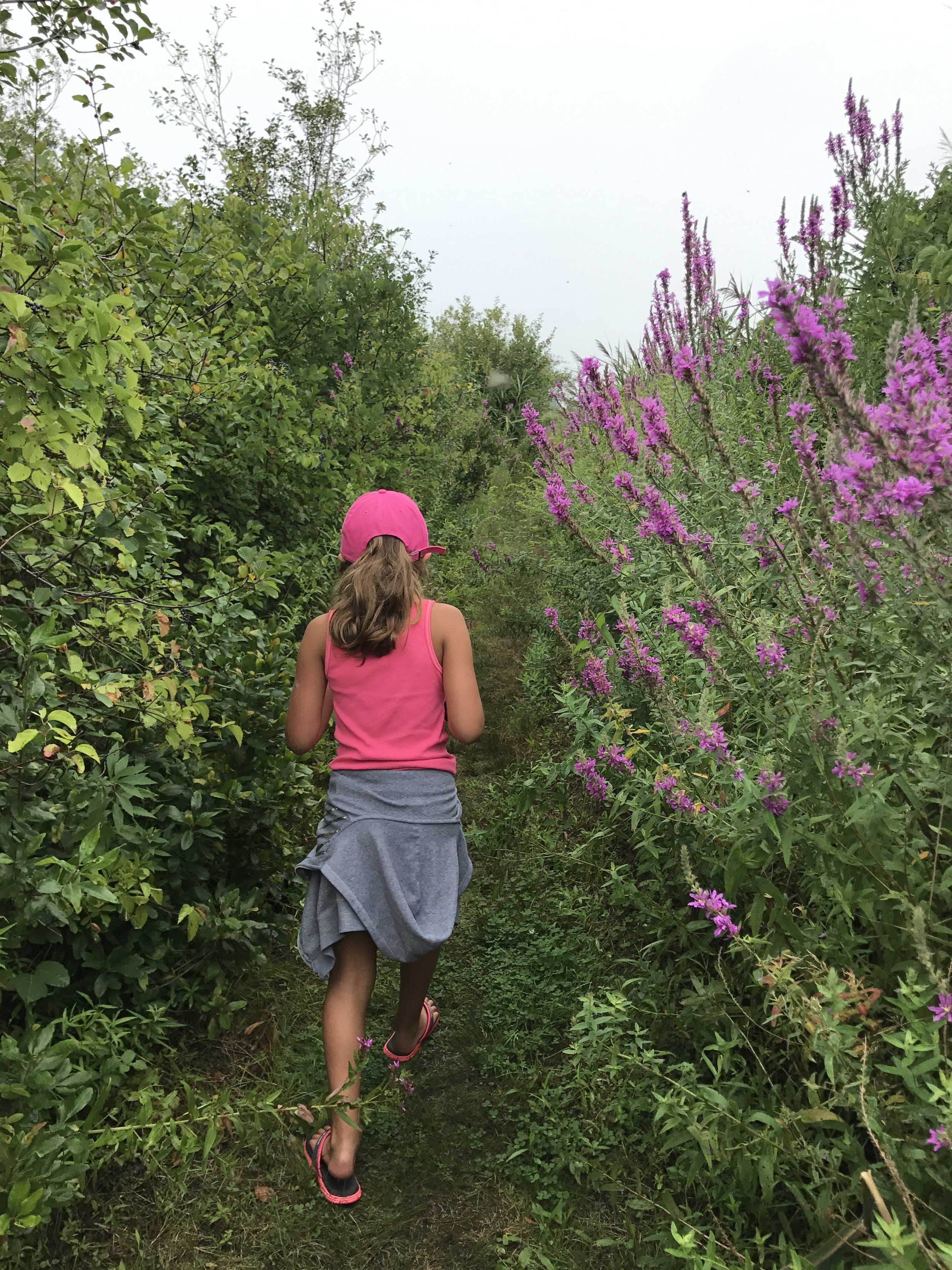 Walking the path amongst the flowers.