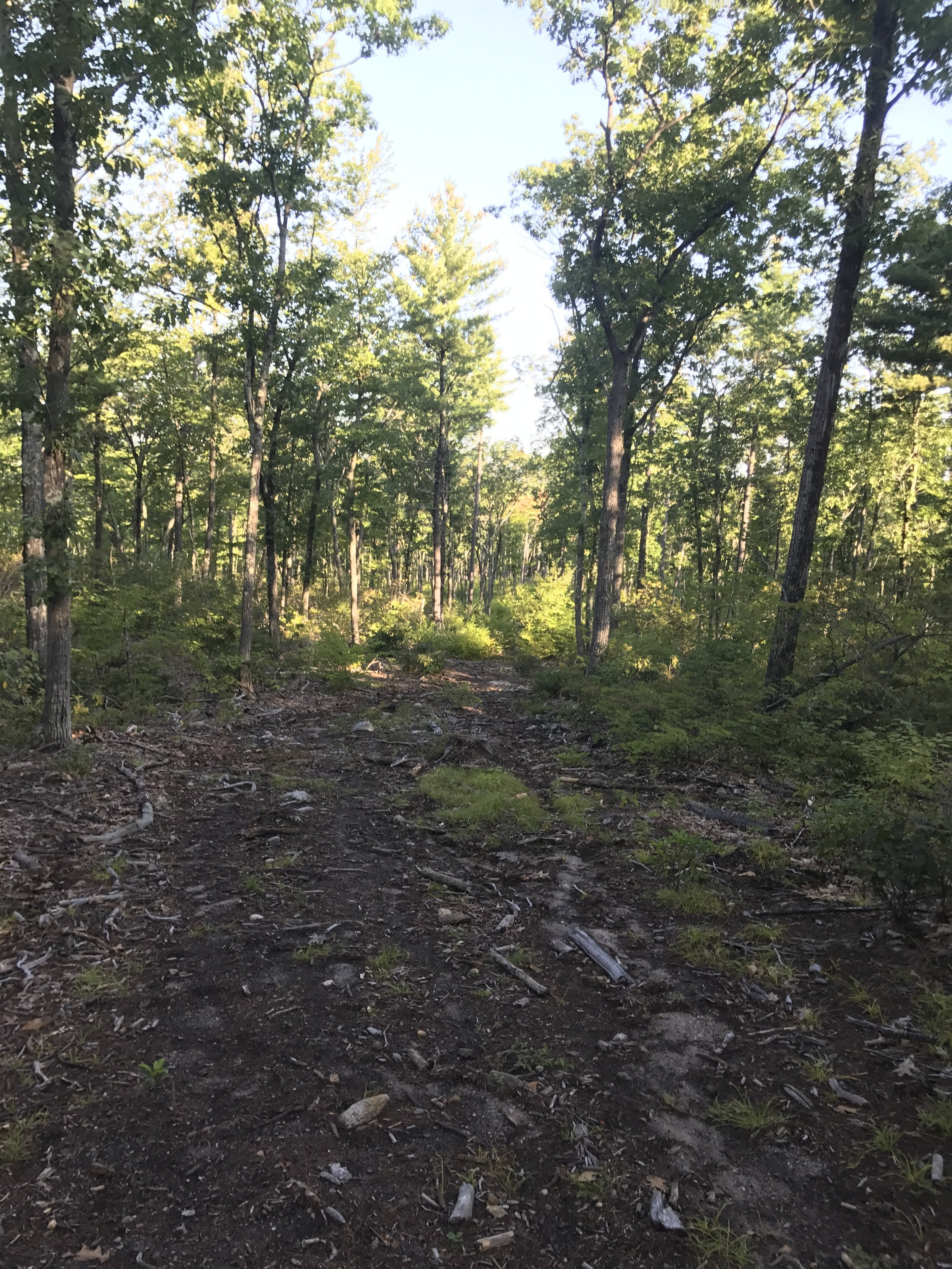 Clear cut section of the trail.