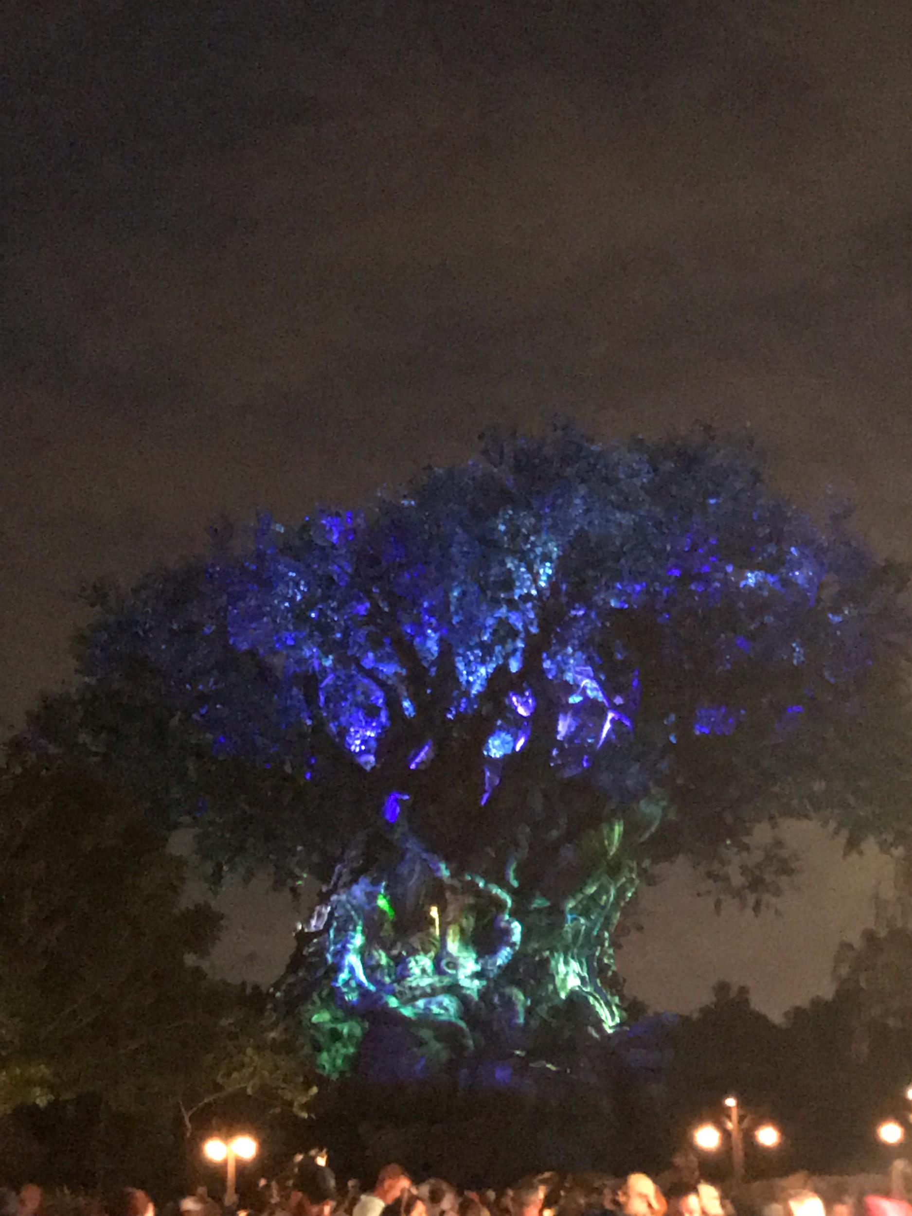 Tree of life at night in Animal Kingdom.