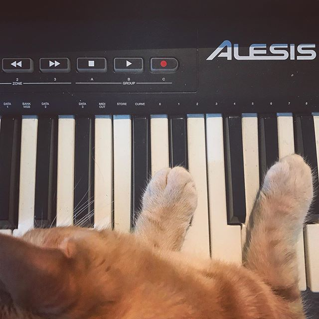 My cat, Plato, wanted to help me out with this demo I'm writing! • • • • • #composer #filmcomposer #filmscoring #shortfilm #musicdemo  #composercat #keyboardcat