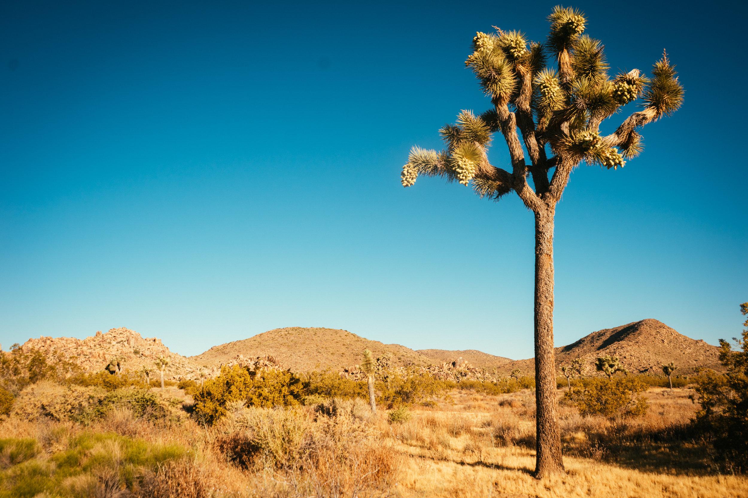 Photo Collection - Joshua tree national park