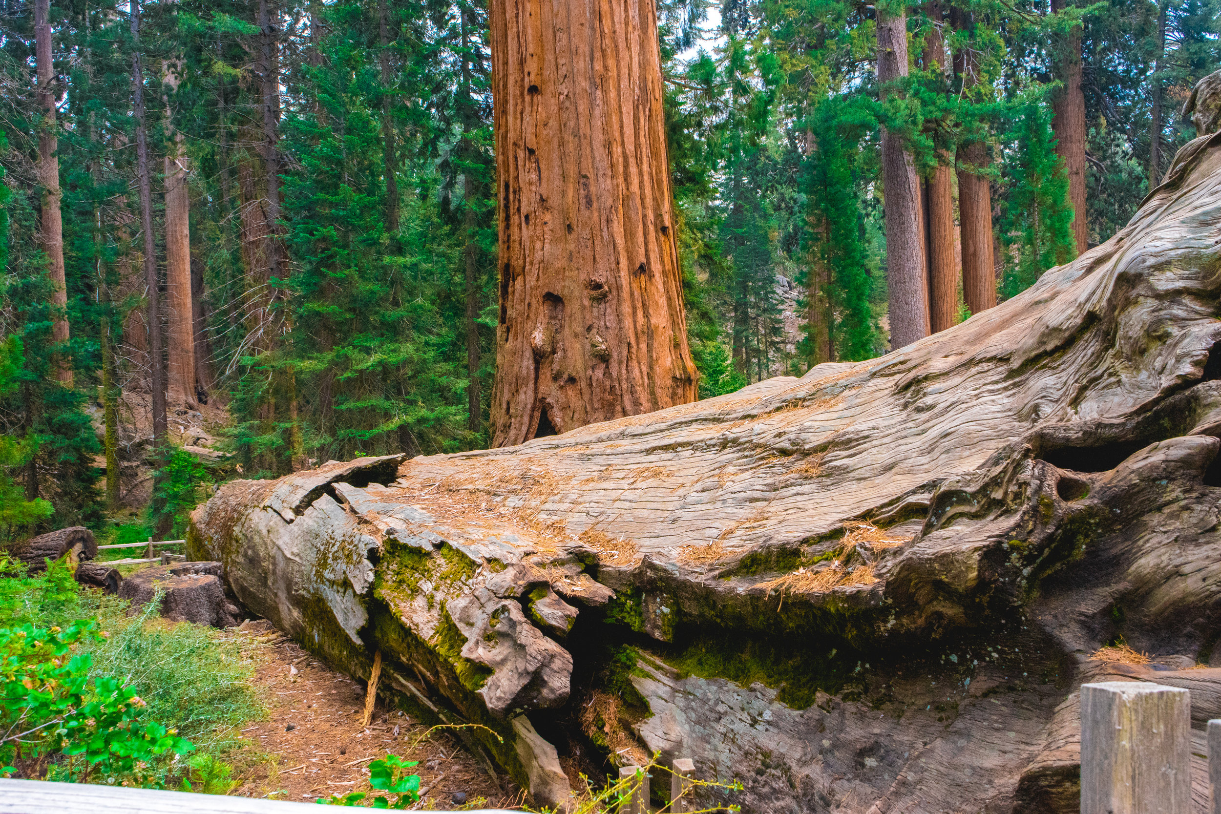 Photo Collection - King's Canyon & Sequoia national parks