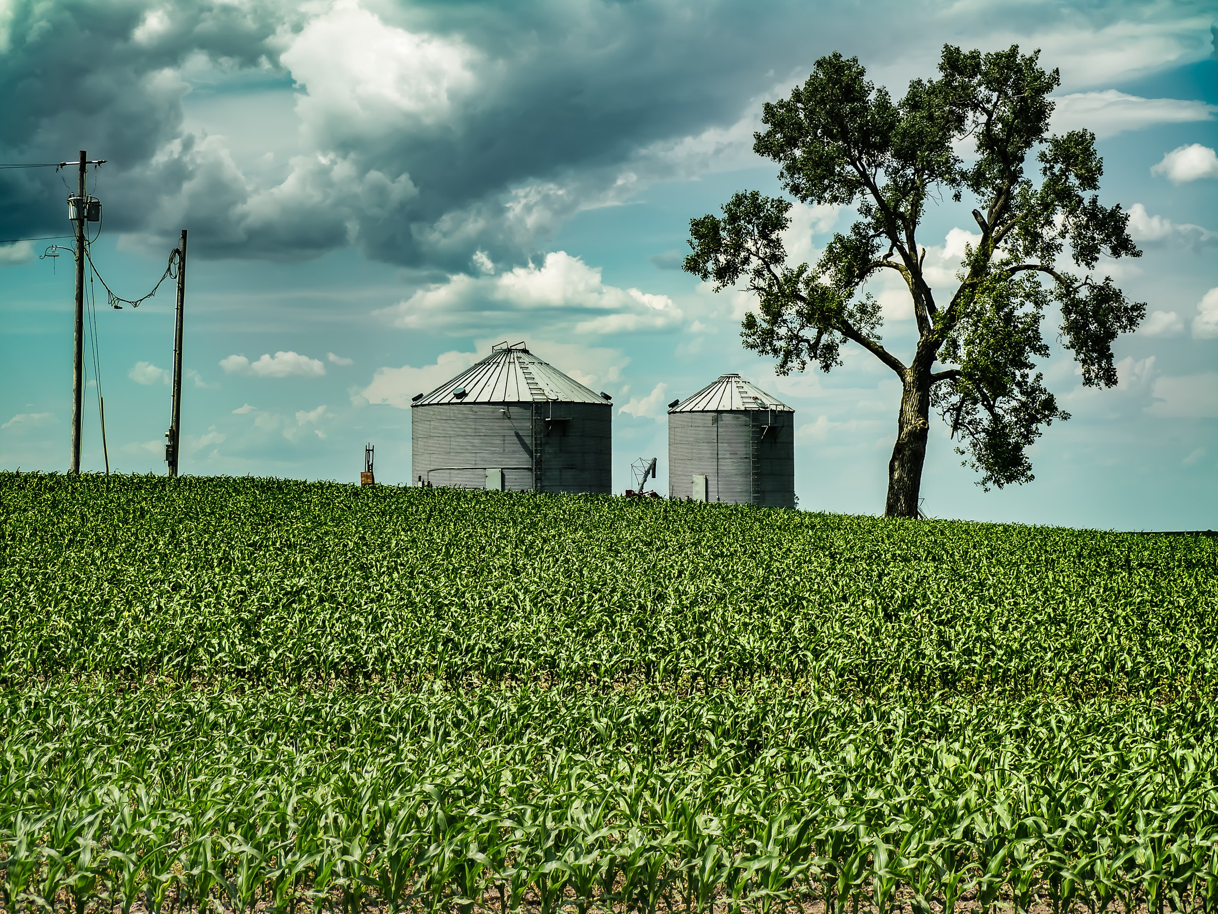 Joshua Tree and Grain Bins