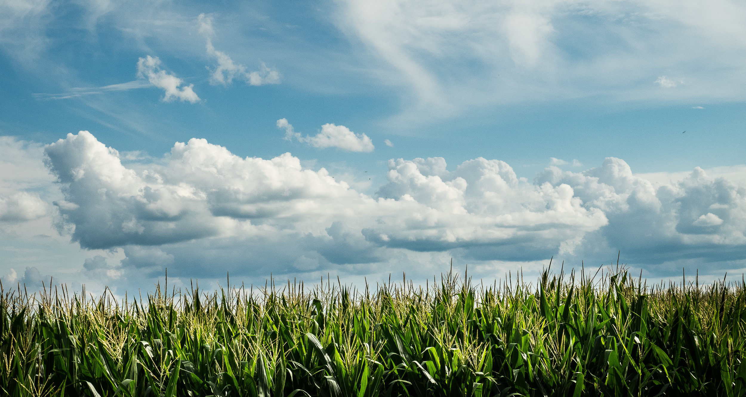 Clouds and Cornfields