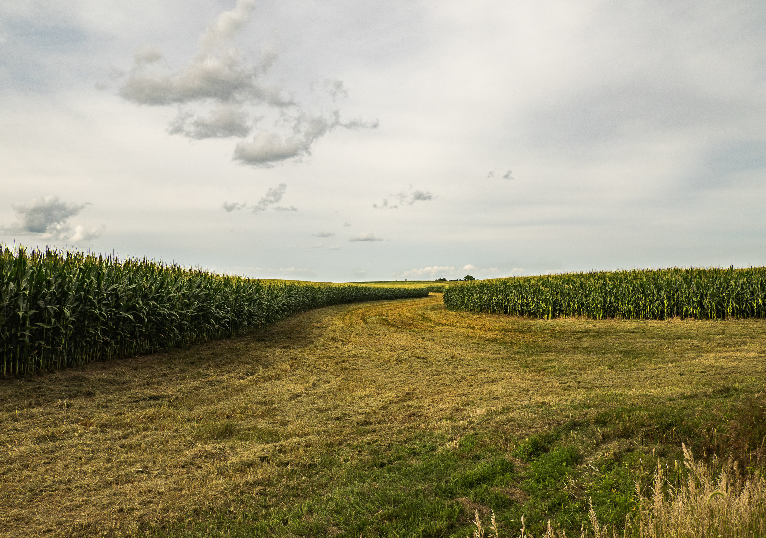 Meandering Rows and Clouds
