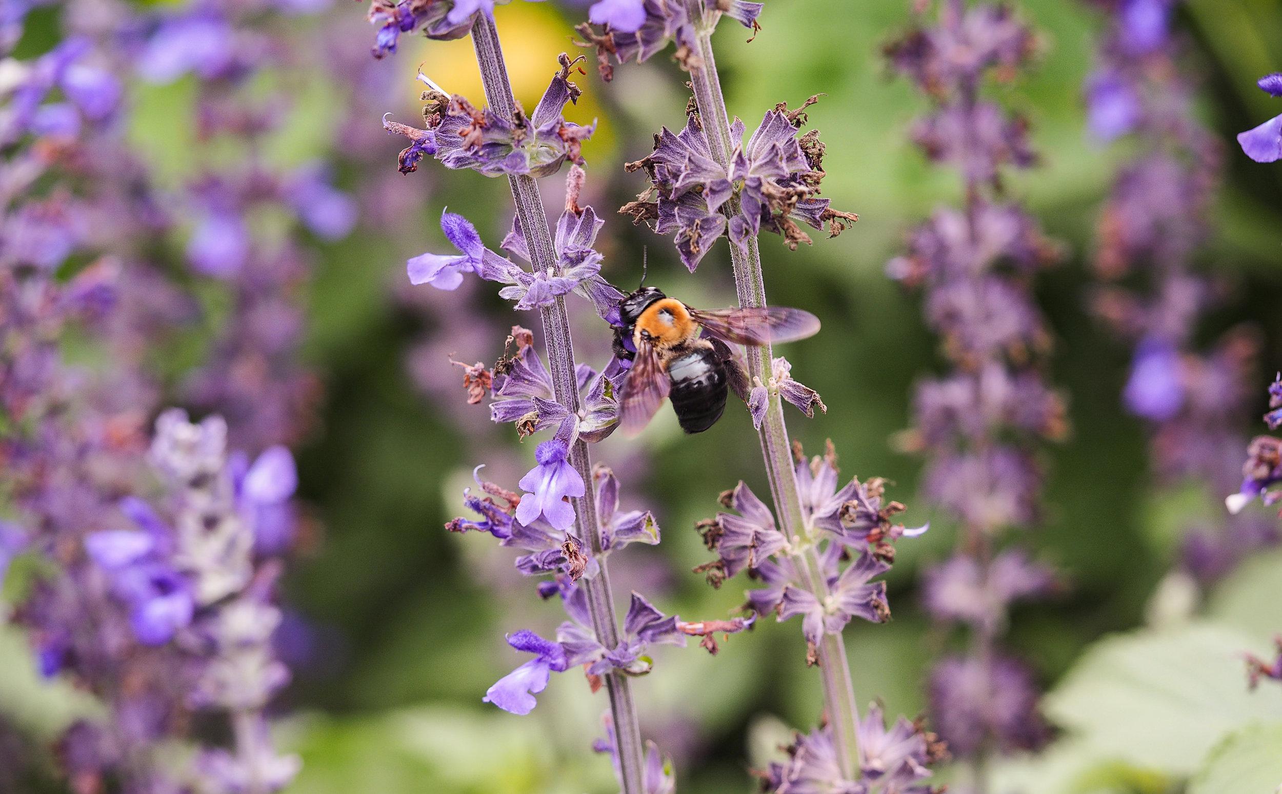Purple and Bumblebee