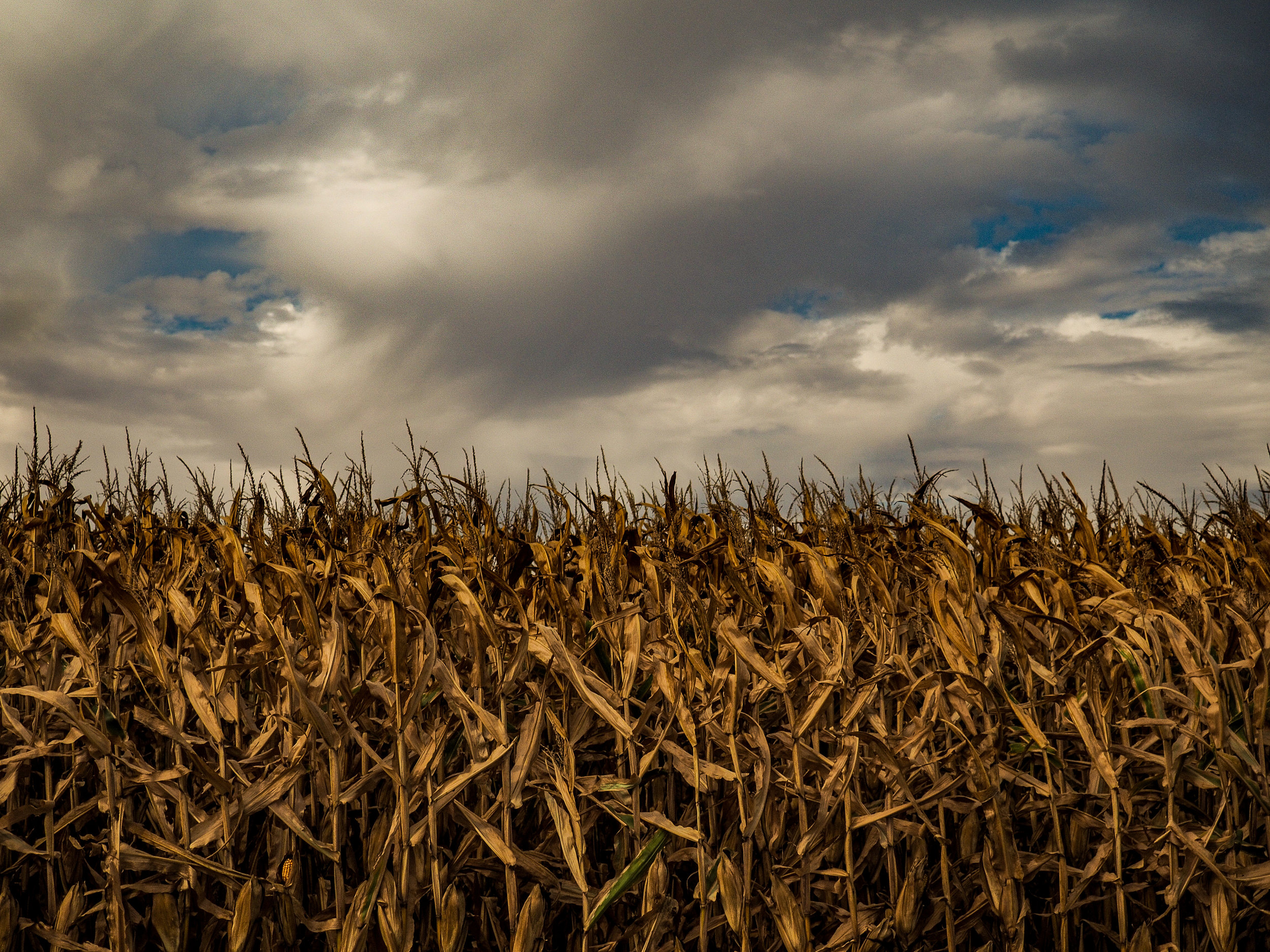 Harvest Time and Clouds