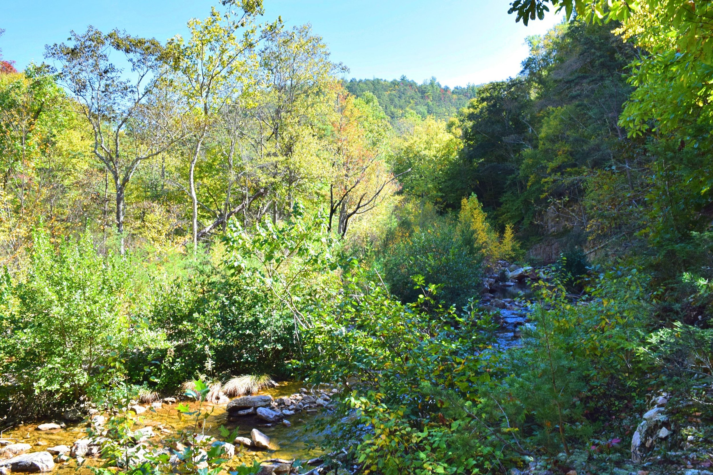 Saint Mary's Wilderness