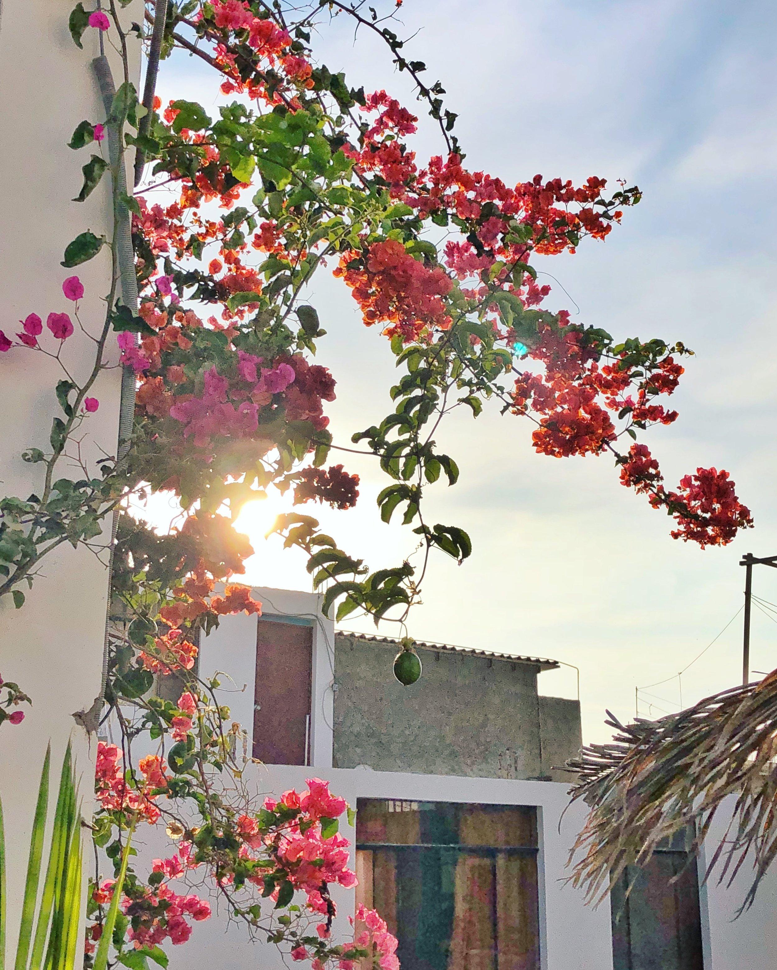 Paracas Hostel 3.JPG