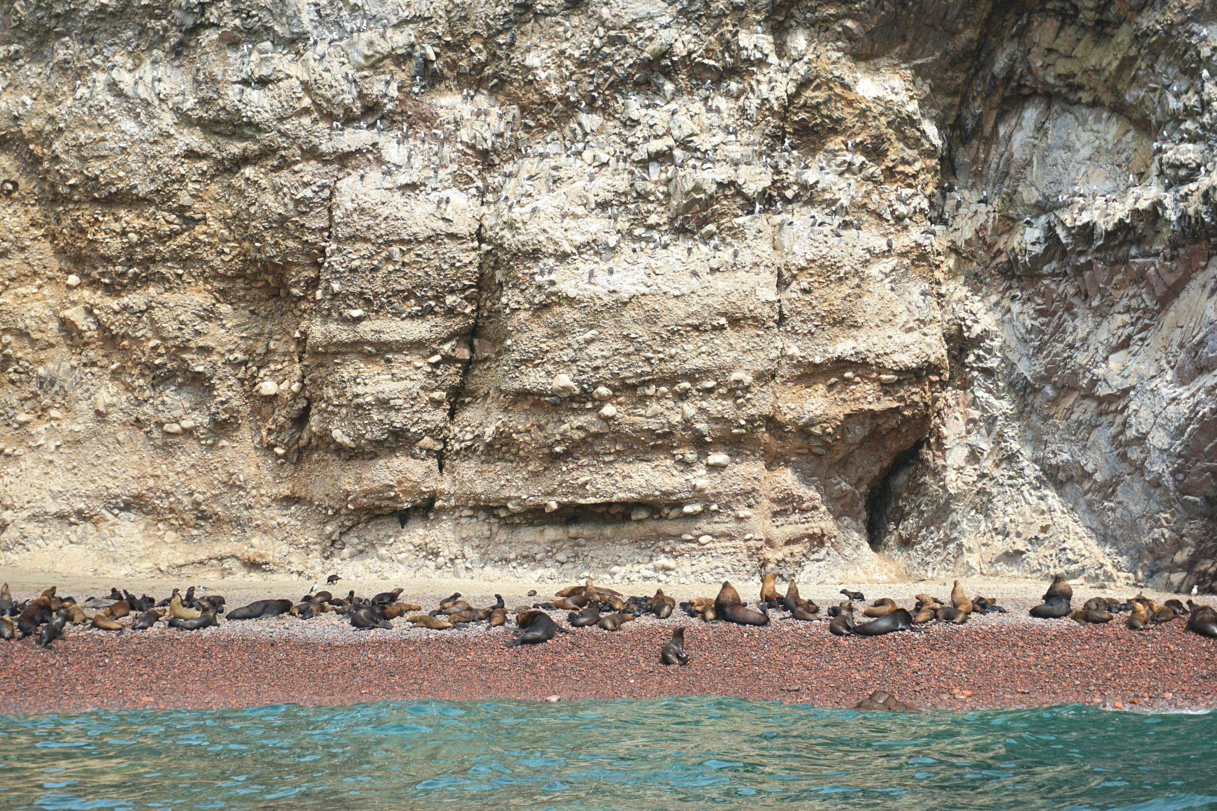 Ballestas Islands 5.jpg