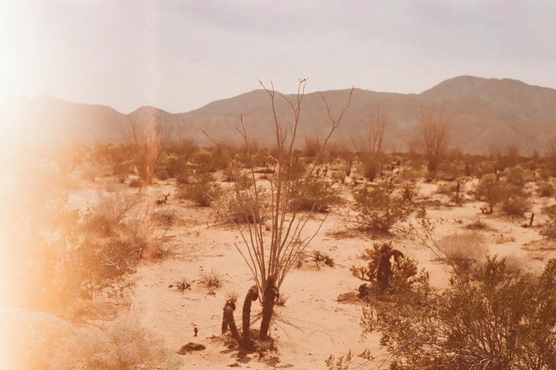 Desertfilm35mm.jpg