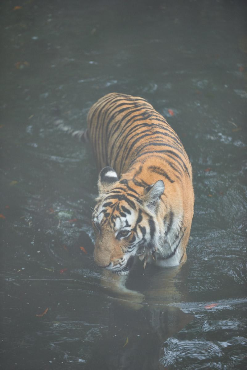 (Zoo)_TIN_7686.jpeg