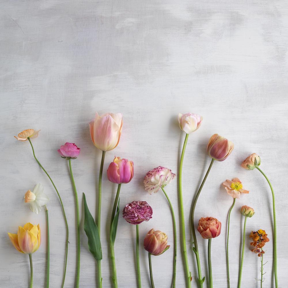 Garden Heaven April Flowers HR_0003.jpg