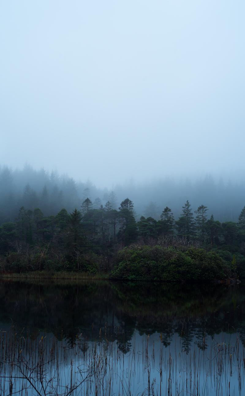 Magic Treeline.jpg