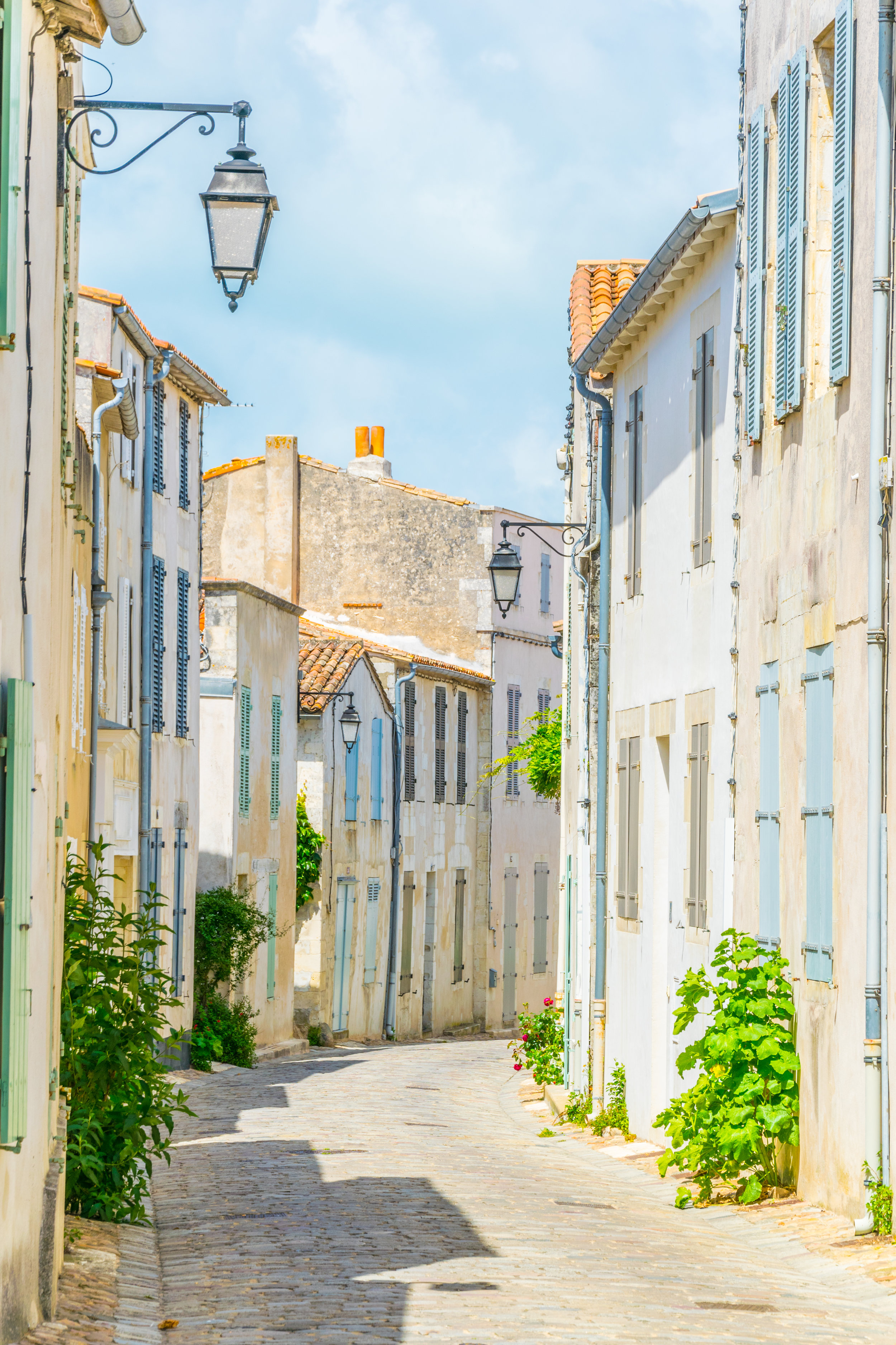Hollyhocks nestled into the cobbled streets of Île de Ré. Photo:  Getty