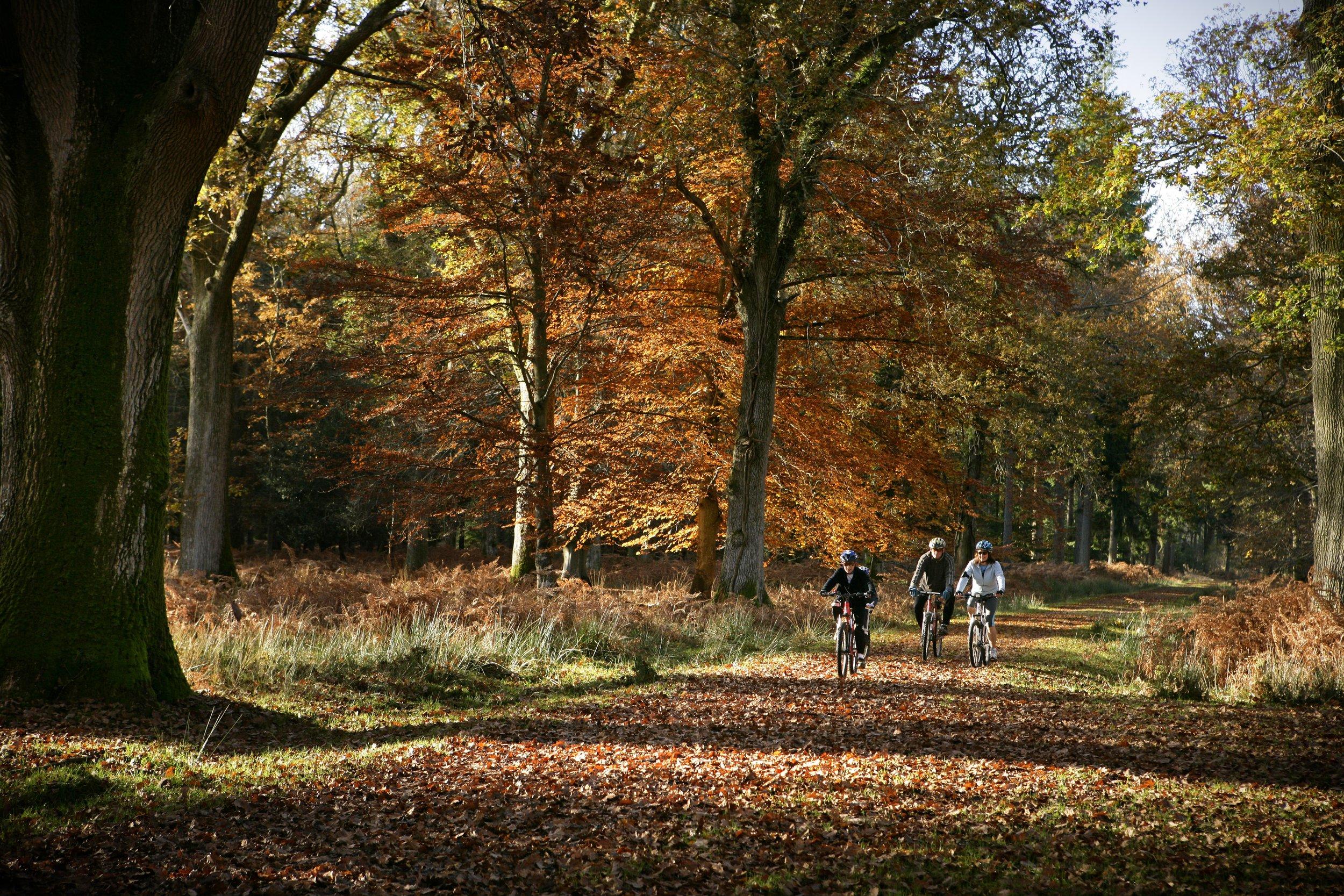 New_Forest_National_Park_Leaves.jpg