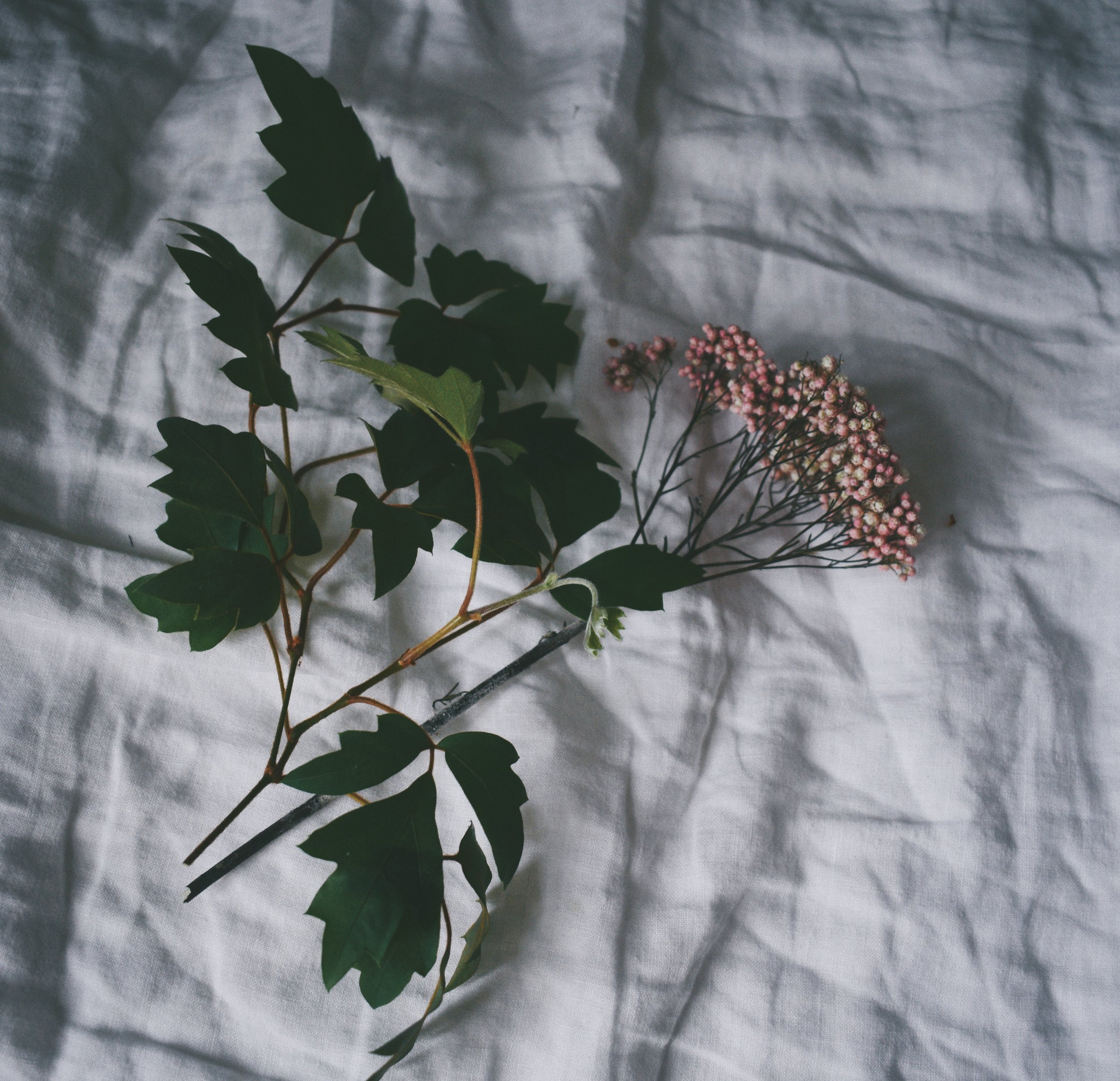 Photos from the Archive-  Celebrating the Imperfect. Pink flowers on crinkled up white sheets